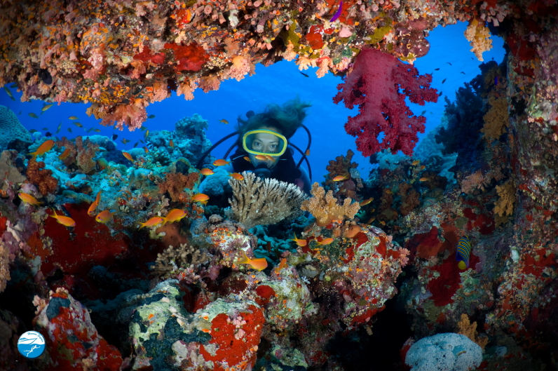 Red Sea Diving Corals